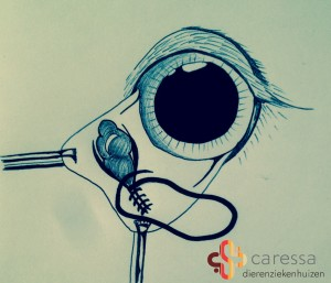 Cherry-eye-operatie-branded