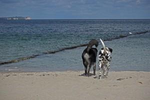 Met-je-hond-op-vakantie-naar-het-buitenland-maximaal-5-dieren