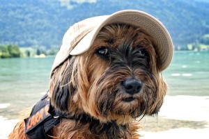 Met-je-hond-op-vakantie-naar-het-buitenland-samen-genieten