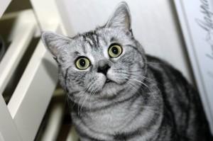 hypoallergeen-dieet-kat
